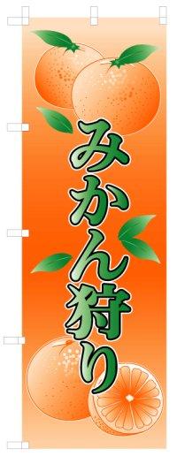 【みかん狩り】処分特価のぼり旗(在庫限り)