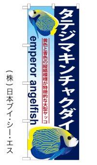 【タテジマキンチャクダイ】のぼり旗