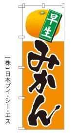 SALE限定品【早生 みかん】特価のぼり旗